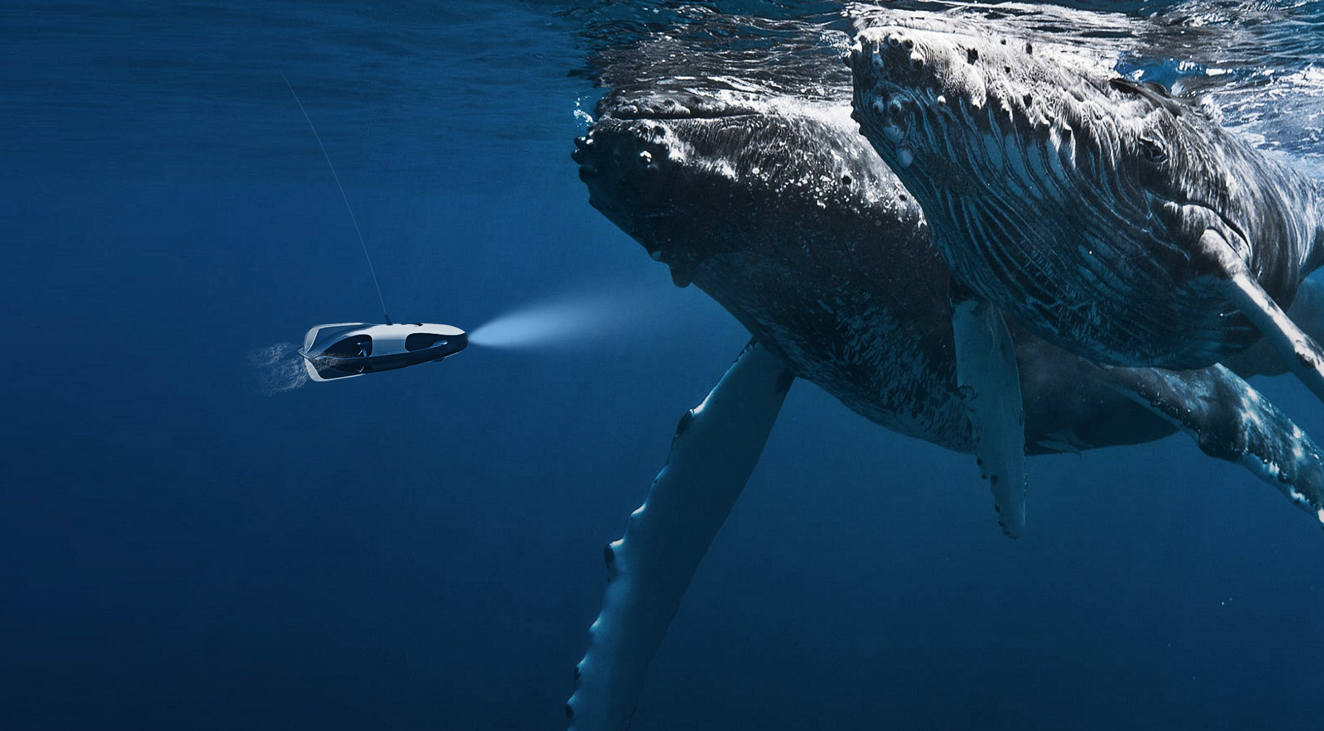 drone-and-whales